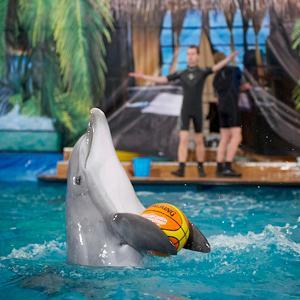 Дельфинарии, океанариумы Родионово-Несветайской