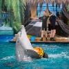 Дельфинарии, океанариумы в Родионово-Несветайской